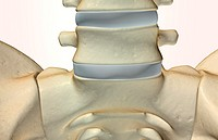 The bones of the vertebral column