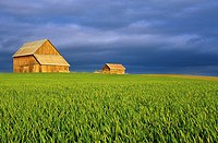 Wooden houses in middle of green fields with dark clouds