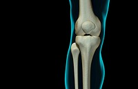 The bones of the knee
