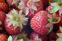 Strawberries (Fragaria x ananassa).