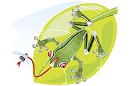 Close-up of a robot frog catching a fly