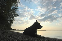 Dog by Clear Lake, evening, Canada, Manitoba, Riding Mountain National Park