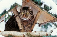 domestic cat - in birdhouse