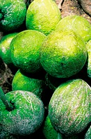Jamaica, Kingston market, breadfruits to sell