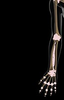 The ligaments of the upper limb