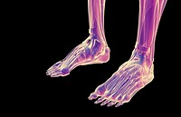 The muscles of the feet