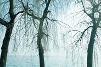 Bare trees, water in background