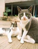 Two cats, close-up, outdoors