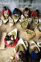 women winnowing cardamom , india