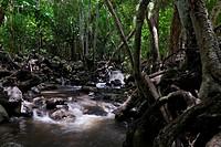 Pukoo Gulch stream and forest at Iliiliopae Heiau Molokai