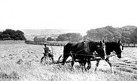 Linton, Haytime c1955