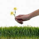 Hand Planting Flowers in Grass