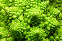 Romanesco cauliflower  Close-up of the head of a romanesco cauliflower Brassica oleracea  The arrangement of florets around the head is according to a...