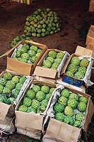 custard apples at wholesale market , vashi , navi mumbai , maharashtra , india