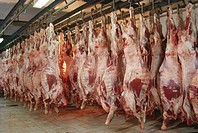 slaughter house , india