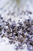 Sugared lavender flowers
