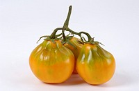 Three tomatoes, variety ´Beuteltomate aus El Salvador´