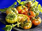 Tomatoes, variety ´Costalluta´