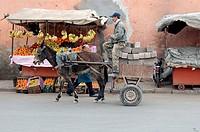 Africa, MOROCCO, Marrakesh, inside Medina, donkey cart,