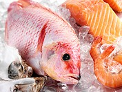 A red snapper with salmon, prawns and oysters Not available for exclusive usages