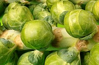 Brussels sprouts on the plant Not available for exclusive usages