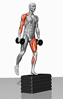 Dumbbell step-up exercise Part 1 of 2