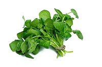 Watercress bunch on white background