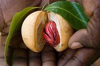 Spices, Grenada