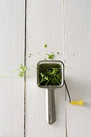 Parsley and a herb mill