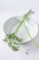 Dill on a plate