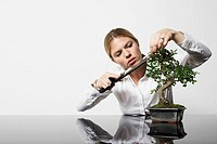 Young business woman at desk pruning Bonsai tree