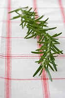 Rosemary