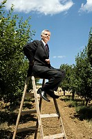 Man sitting on ladder in orchard
