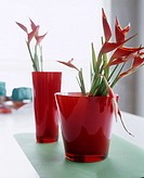 Heliconias in red glass vases