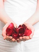 Hands holding rose petals