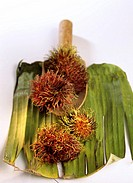 Rambutan fruits Nephelium lappaceum