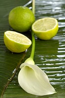 Calla flower with limes