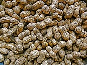 Arachis hypogaea is the scientific name for peanuts. They are also called goobers, groundnuts, ground peas, earth nut, pinder, pinda, monkey nut, and ...