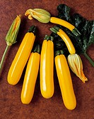Agriculture - Golden zucchini on a brown textured surface, variety Goldenrod, studio