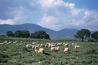 Italy - Sardinia Region - Catena del Goceano near Burgos