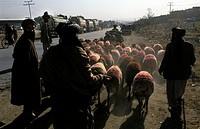 Kabul, shepherd in downtown kabul
