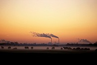 Broek in Waterland , sheep in a meadow and industry with chimney