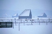 Texel, wintertime, sheep stable or fold called schapenboet