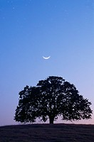 Moon over silhouette of tree at dusk