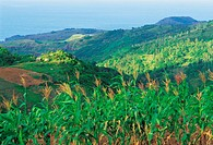 Mauritius, Rodrigues, sugar cane fields, sea and mountains