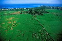 Mauritius, sugar cane fields, aerial view