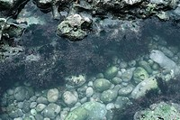Coral in shallow water
