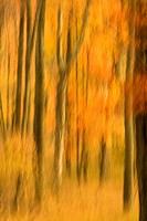 Forest in the Fall Fine Art