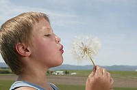 Boy 4-5 blowing dandelion in field, close-up, profile