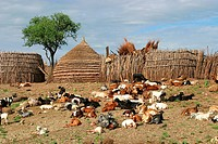 Domestic Goats and granaries, Nyanyagachor, Sudan